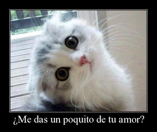 Imagenes-De-Gatos-Con-Frases-De-amor-5