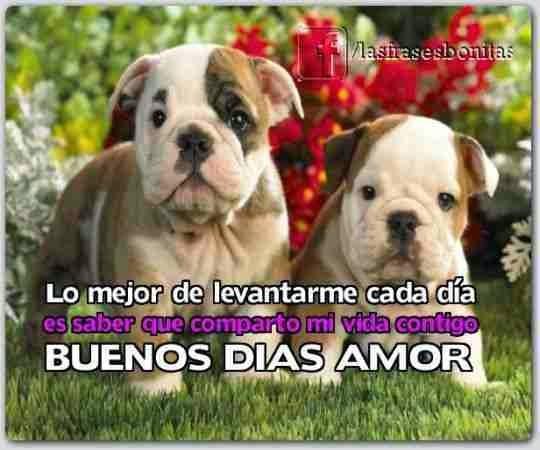 Imagenes De Buenos Dias Amor Con Frases Bonitas Imagenes De Amor