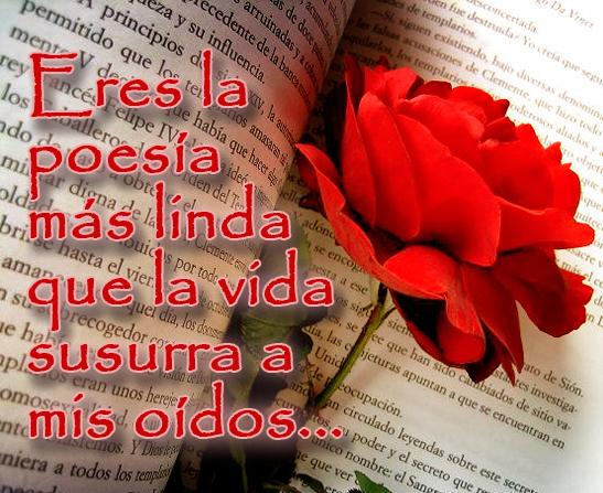 Imágenes De Rosas Con Movimiento Frases Y Mensajes De Amor