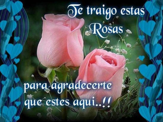 Imagenes De Rosas Con Movimiento Frases Y Mensajes De Amor